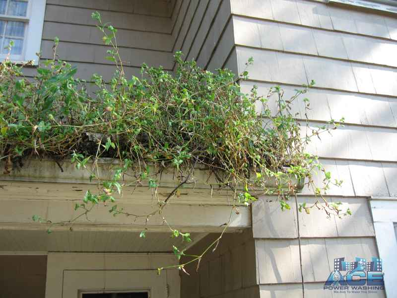 More overgrowing of plants in gutters in Hasbrouck Heights, NJ