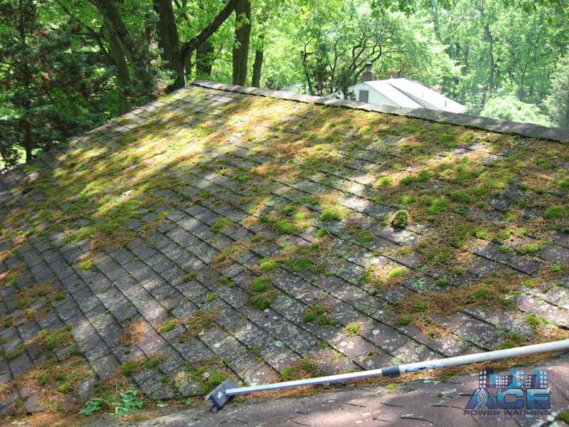 Green Moss Attacking Roof in Woodcliff Lake, NJ