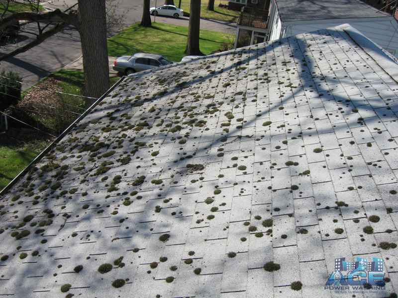 Roof Cleaning Needed in Dumont, NJ to Remove Green Moss